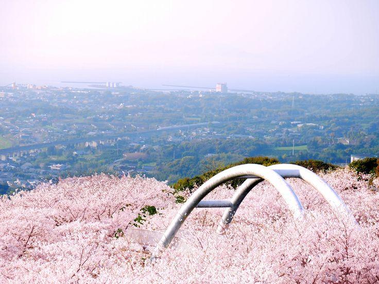 山の頂にある東光山公園からは広く出水平野、遠くは東シナ海から天草の島々まで見渡すことができます。 春になると桜(約330本)やツツジの花が咲き誇り、九州新幹線の走る姿も一望できるスポットです。 桜の見ごろの時期は提灯で桜がライトアップされ、夜空に照らされる幻想的な風景を楽しむことができます。 展望所や草スキーなどのアスレチックもあり、ファミリーにもオススメ。 2017年4月1日 3歳児未満用遊具エリア「すくすくランド」がOPEN。駐車場は105台。