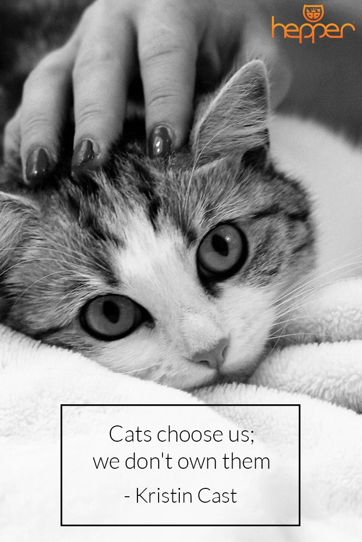Quotes About Cats Gorgeous 8 Best Best Cat Quotes Images On Pinterest  Cat Quotes Quotes