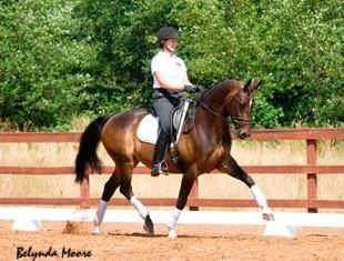 Millione - New Video Added!   Horses, Dressage & More