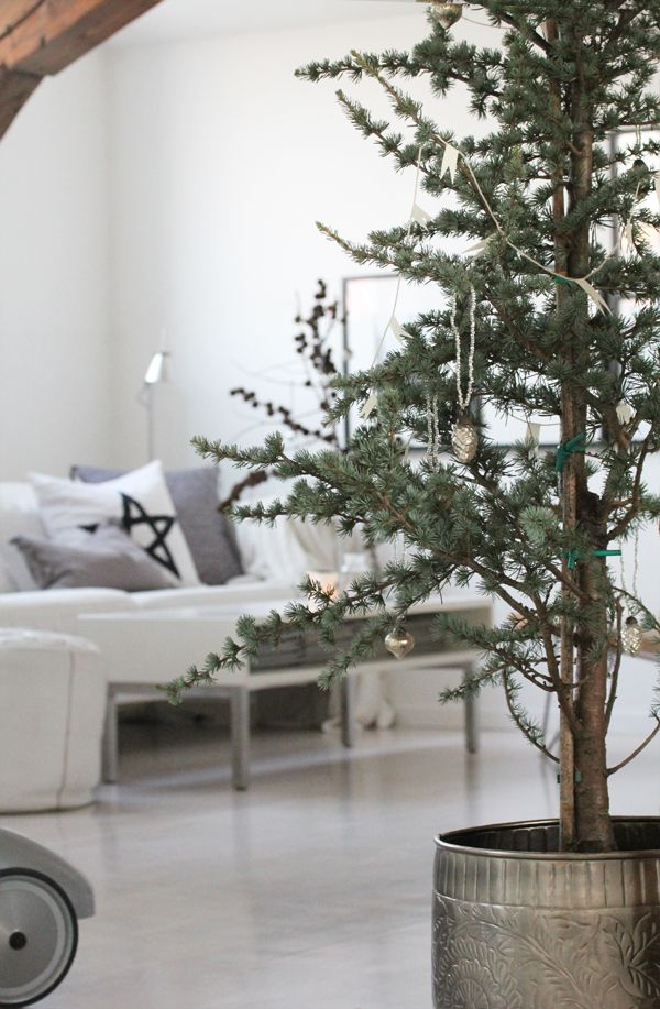 one day, i will have a tree in my yard to bring in for christmas and replant after the holidays :)