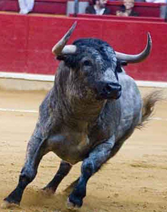Toros. De los animales más bonitos que existen!!!!