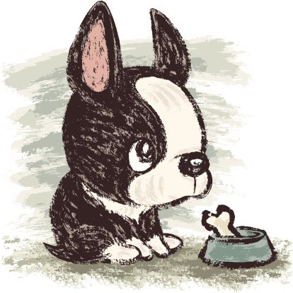 Boston terrier and meal