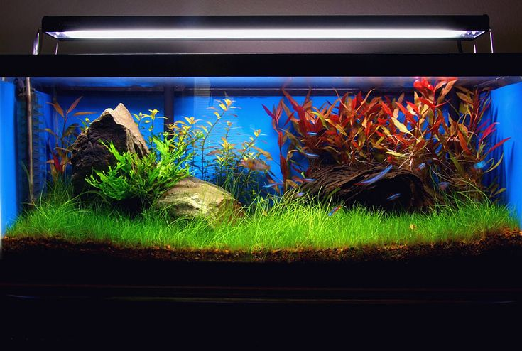 TOTM - August 2009 - Anomaly 1st Place - AC Tropical Fish Pictures Beautifully planted tank