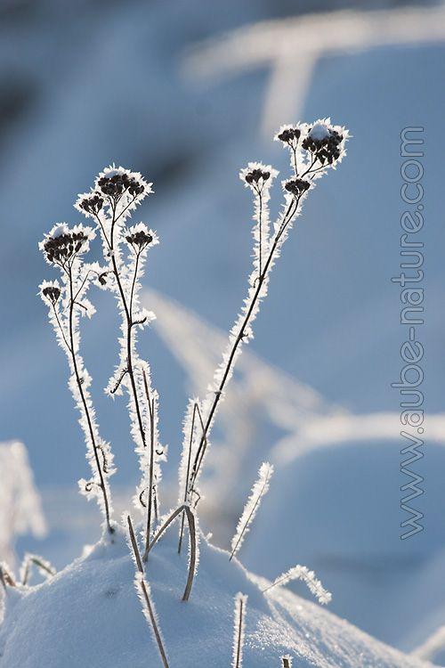 5 conseils pour de meilleures photos de nature en hiver