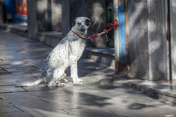 Dog waiting. Lavapiés, Madrid.