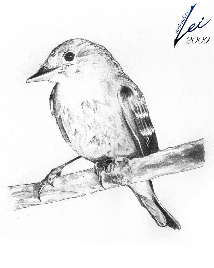 Bird Drawings - Google Search | Art -Inspiration - Illustration | Pinterest | Drawings Bird And ...