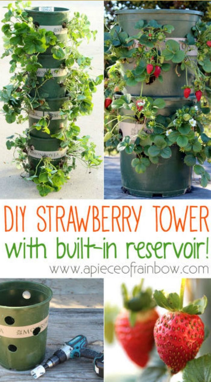 Strawberry Tower with Built-In Reservoir ~ I can't wait to try this!