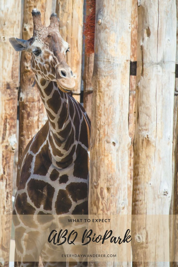 Plan your trip to Albuquerque's BioPark Zoo, Botanic Garden, and Aquarium #travel #newmexico #ABQ