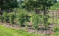 Lists of deer resistant plants, fruits, and veggies.