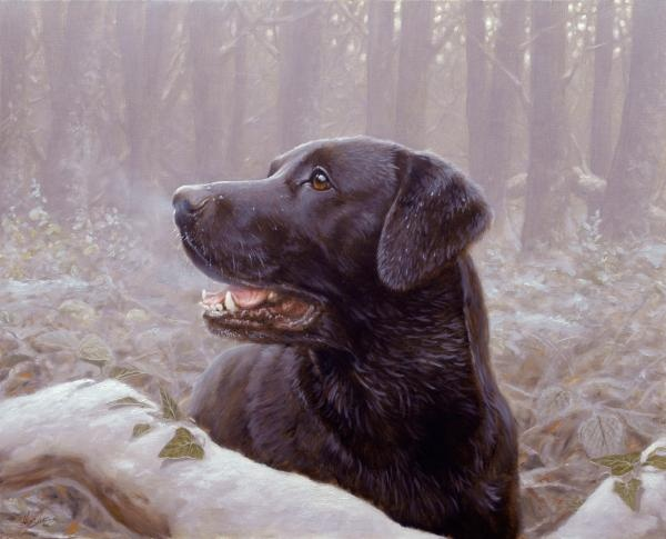 black lab in the woods