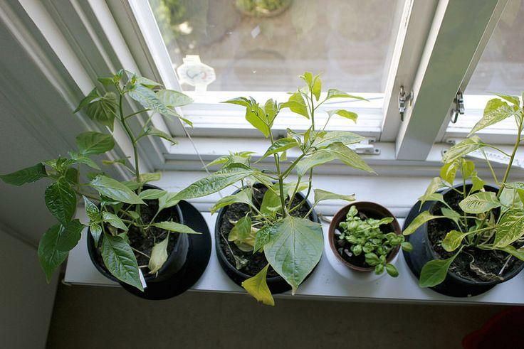 Här bor Ellen: Läget på fönsterbrädorna Indoor Gardening Plants Green