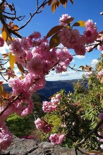 Leura Gardens Festival, Blue Mountains Spring Gardens - Home