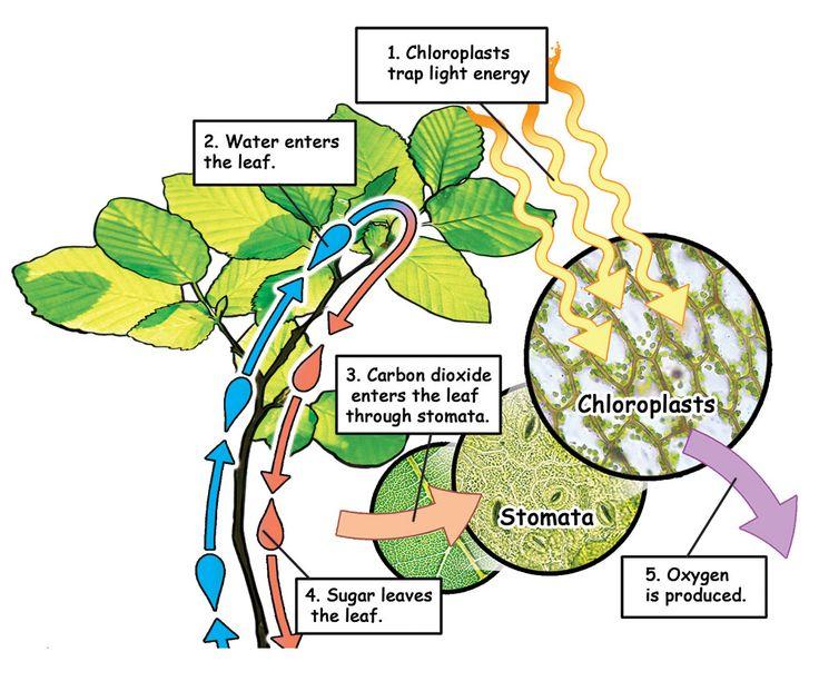 11++ Do animal cells have flagella ideas