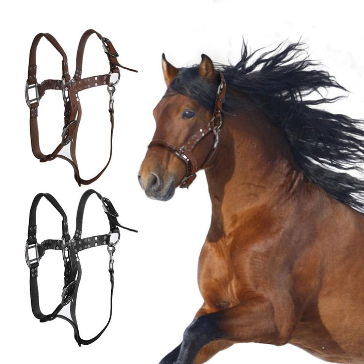 High Quality Horse Bridle Horses Equestrian Woven Belt Leather Headstall Racing Riding Competitions Farm Animals Halters