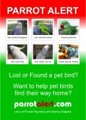 parrotalert.com flyer  Lost and Found Parrots / Birds - Parrot / Bird Reporting and Alerting Register