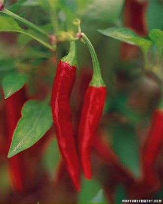 Nitrogen phosphorus potassium balance in soil: Red Peppers, Veggie Gardens, Products Npk, 20 20 20, Formula 5 10 5, Vegetables Gardens, Greatest Quantiti, Fertility Labels, Gardens Glossari