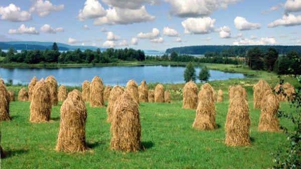 Järvimaisema ja  heinäpelto (72561). heinäpelto, heinäseipäät, järvi, järvimaisema, keski-suomi, kesä, kesäpäivä, maalaismaisema, peilityyni, pilvet