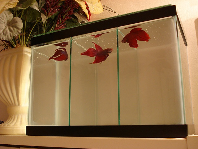 2 5 gallon betta tank by patisotagami via flickr i for 2 gallon betta fish tank