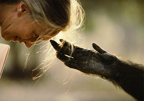 """""""J'aime passionnément l'Afrique. Quand je suis seule en forêt, je m'y sens comme dans une très ancienne cathédrale. C'est, pour moi, un lieu très précieux où je suis en connexion avec la vie, au milieu des insectes, des animaux, des arbres. Comme si je sentais « l'esprit de la forêt » et que je touchais au divin."""" Jane Goodall"""
