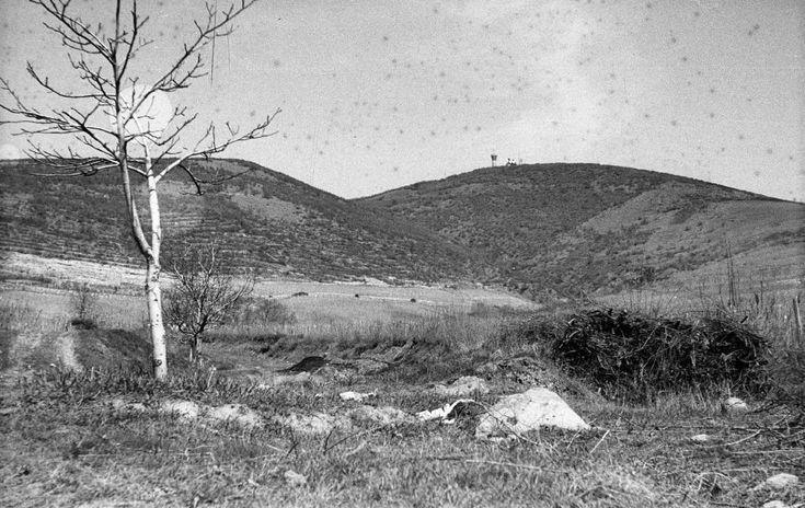 1965 orig: MÉSZÁROS ZOLTÁN MAGYARORSZÁG TOKAJ szemben a Kopasz-hegy és a TV adótorony.