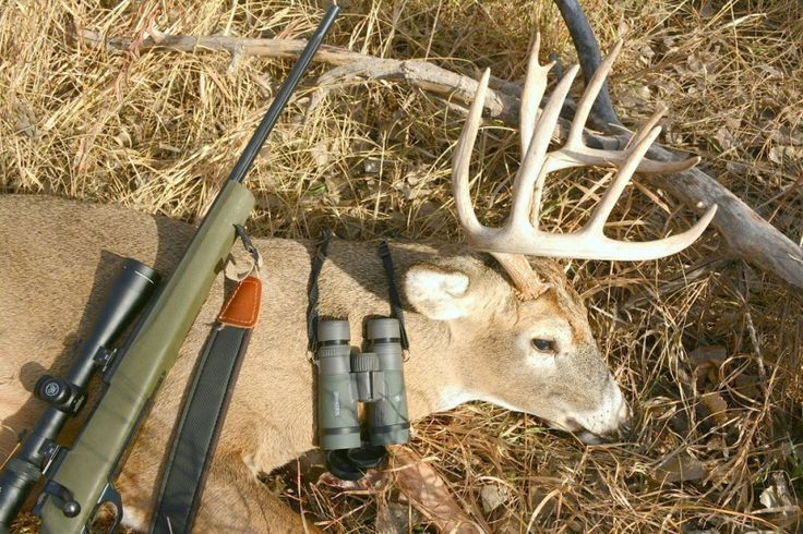 Deer Hunting Tips: Best Weapons, Safety Questions and Expert's Advices