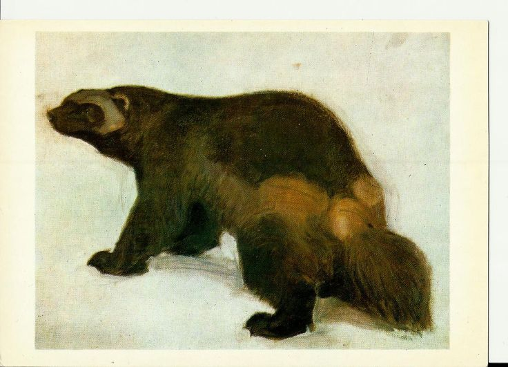 Wolverine, Drawing, Illustrations of Animals by Vatagin, Vintage Russian Postcard  unused 1978 by LucyMarket on Etsy