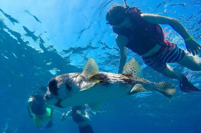 Sosua Bay Snorkeling Tour Snorkeling is one of the most exhilarating activities to try in the Caribbean. The clear, warm waters provide an excellent environment to see the marvelous corals and school of fish up close. In this snorkeling tour you will the