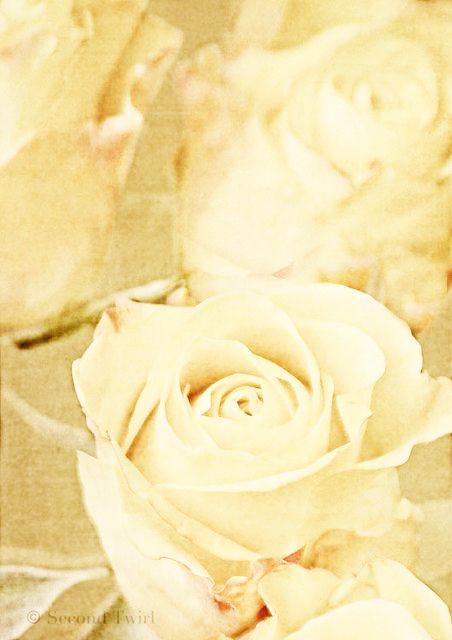 Buttercream Roses~~