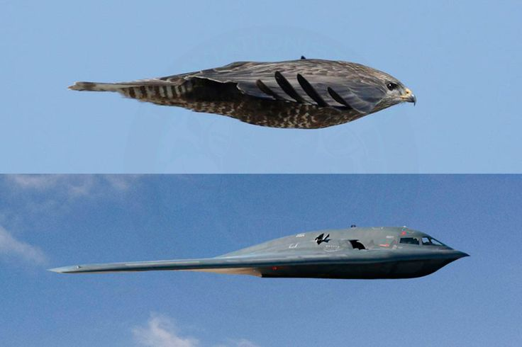 The Aviationist » An unbelievable image proves the shape of the B-2 stealth bomber was suggested by Mother Nature