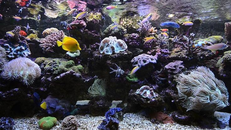 A beautiful aquarium screensaver with real living coral. Impress your friends with this amazing fish tank featuring exotic fish. View the video clip at http://www.uscenes.com/video/living-coral-aquarium/