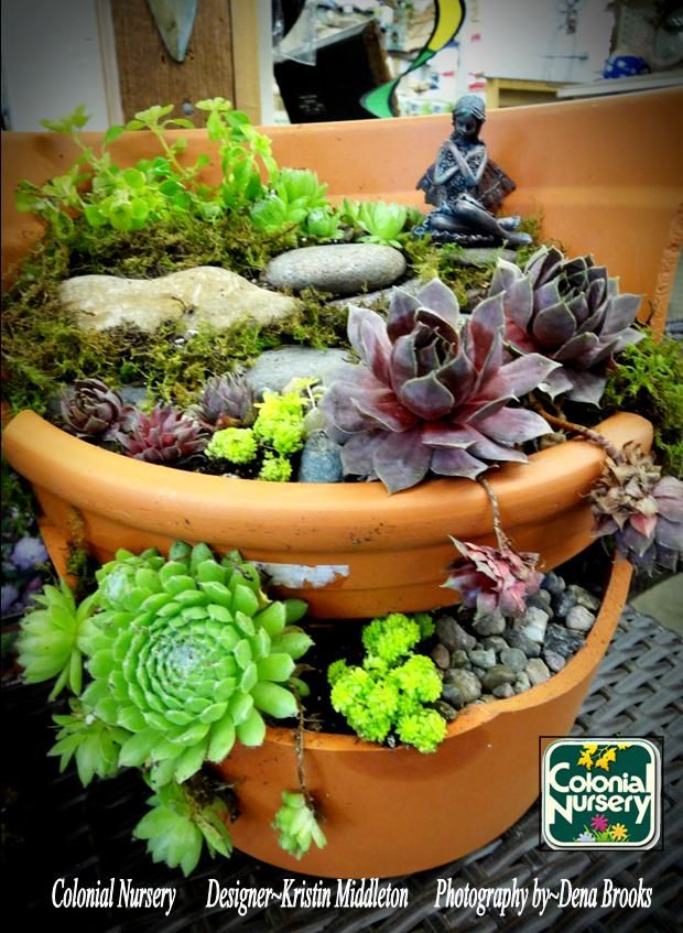 17 Best Images About Colonial Nursery's Fairy Gardens And