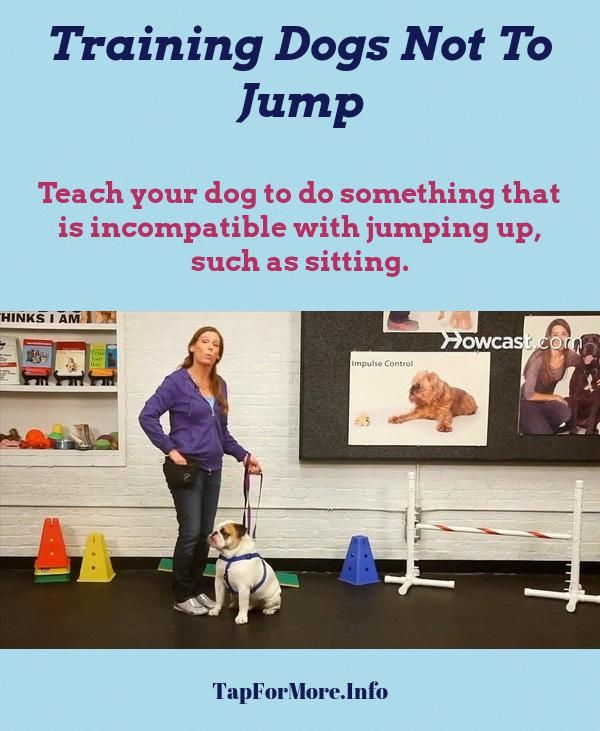 Stop Dog Jumping And Dog Training Tips Biting Check The Pin For