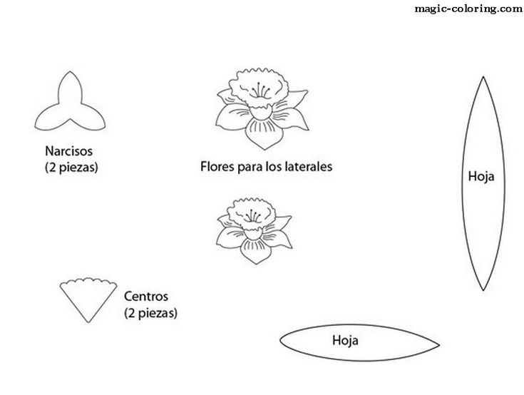 template of a daffodil - magic coloring narcissus daffodil flowers templates