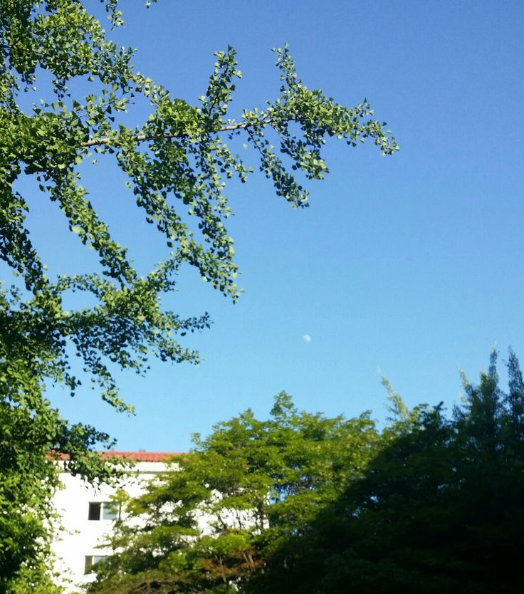 하늘과 작은달