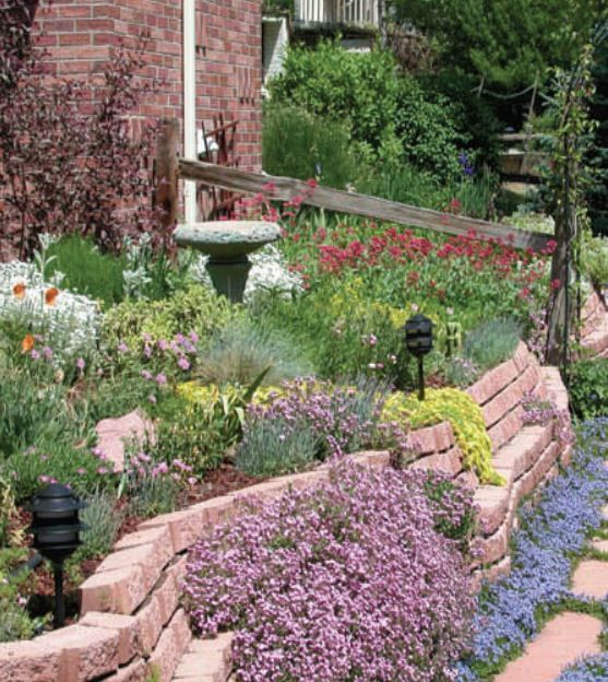 1000+ Images About Xeriscape Ideas For Michelle's Front