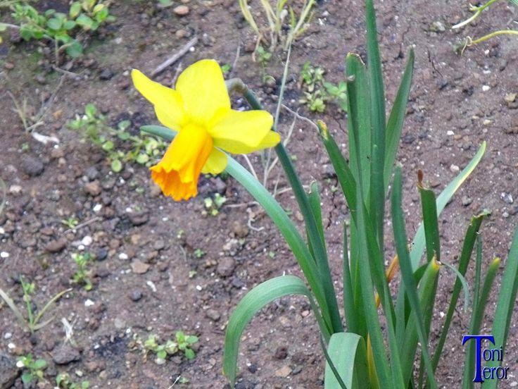 Narciso by ToniTeror.deviantart.com on @DeviantArt