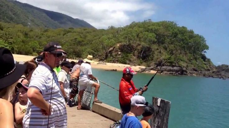 Nick Albert Fighting a monster fish off Palm Cove jetty. #palmcovejetty #fishing