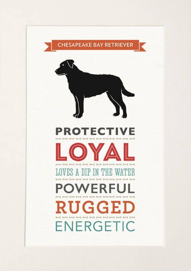 Chesapeake Bay Retriever Dog Breed Traits Print