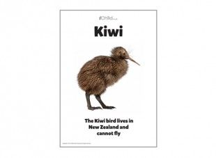 Print our coloured poster of New Zealand's famous native bird, the kiwi.