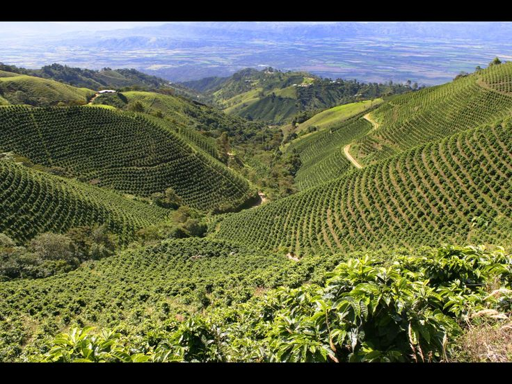 Tolima, Colombia coffee plantations