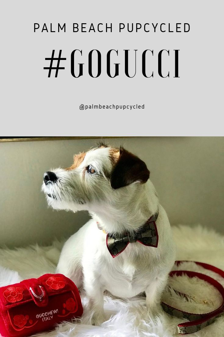 Jack russell in upcycled custom handmade gucci collar