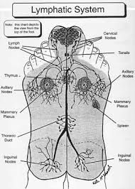 reflexology - Lymphatic System