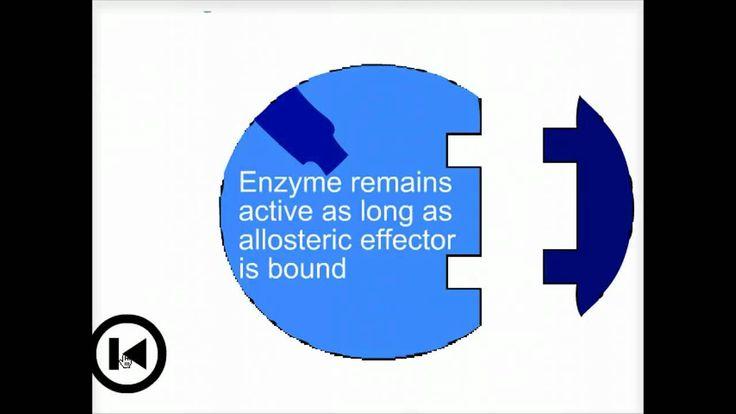 Enzymes & allosteric regulation - Biofundamentals