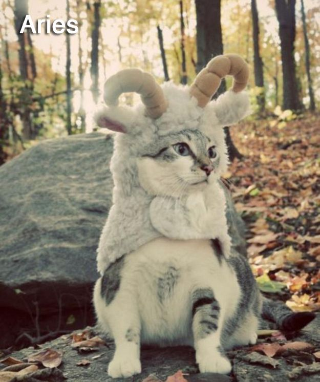 The 12 Cats Of The Zodiac: Aries, Halloween Costumes, Wild Things, Mountain Goats, Cat Costumes, Pet Costumes, Kitty, Animal, Baby Cat