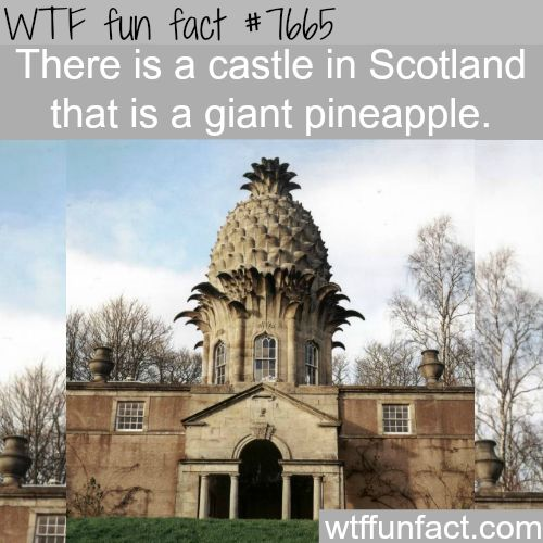 Giant pineapple castle - WTF fun facts