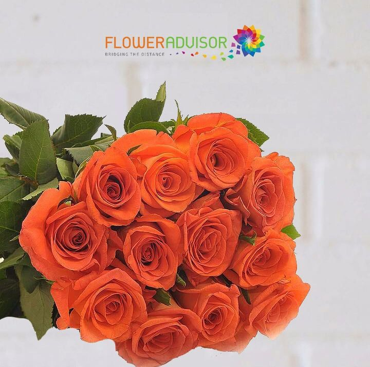 With their blazing energy, orange roses are the wild child of the rose family. Whatever feelings you might be bubbling over with enthusiasm, passion, gratitude.  – Meaning of Orange Roses