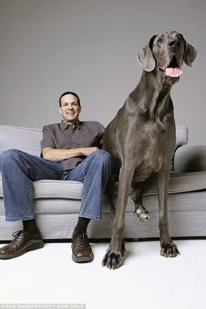 Best Cães Gigantes Images On Pinterest Dogs Big Dogs And - Meet hulk possibly worlds biggest pitbull still growing