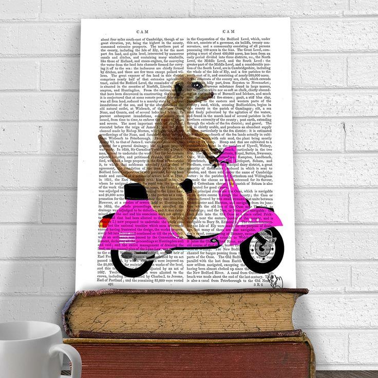 Meerkat on pink moped book print   hardtofind.