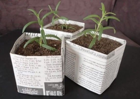 newspaper pots for seedlings.  Recycle newspaper, toilet paper rolls, paper towel rolls and coffee filters to start seedlings.
