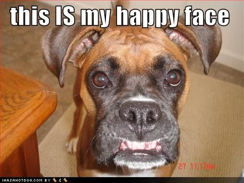 :0)Boxers Puppies, Boxers Baby, Boxers Dogs, Happy Face, Silly Boxers, Happy Dogs, Boxers Bulldogs, Dogs Face, Animal